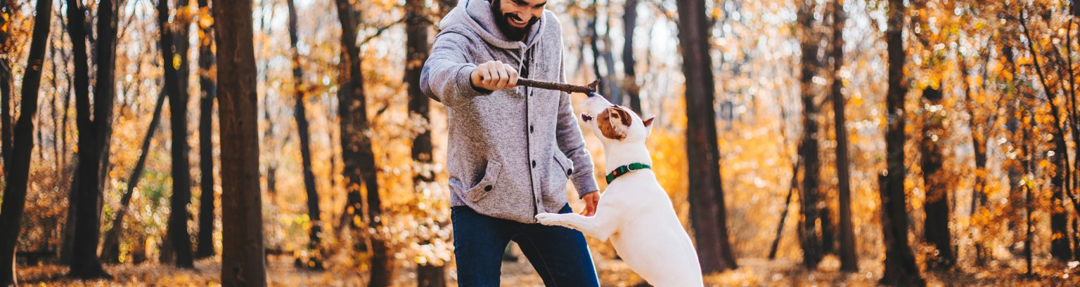 Man with stick is training of the dog stock photo